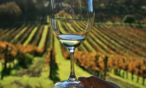 Results of new California wine tourism survey released