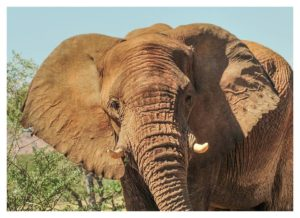 Namibian Tourism Ministry brushes off questionable killing of desert elephants