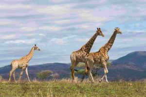 Tanzania asks China and Germany to help boosting tourism