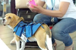 National Federation of the Blind 'deeply concerned' about Delta's new service animal policy