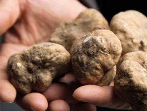 italy truffles