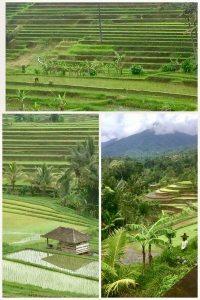 UN's World Heritage Site - Jatiluwih Rice Paddies