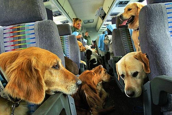 How Can Airlines Treat Pets Better On Planes?