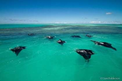 Manta Rays spotted in the St. Francois Lagoon