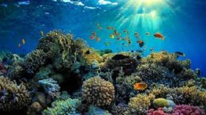International gathering to help the Great Barrier Reef help itself