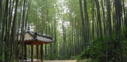 Korean Tourism Damyang: Agarden without bamboo is a day without sunshine