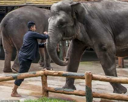 World Associations of Zoos and Aquariums investigating Indonesia zoo for abuse claims