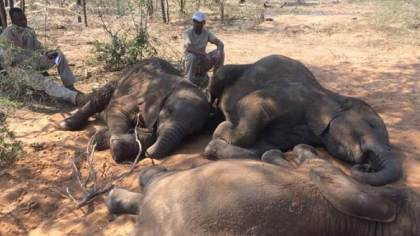 More confusion over the fate of Botswana's elephants