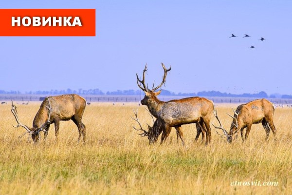 Тур в Асканію-Нову із Києва