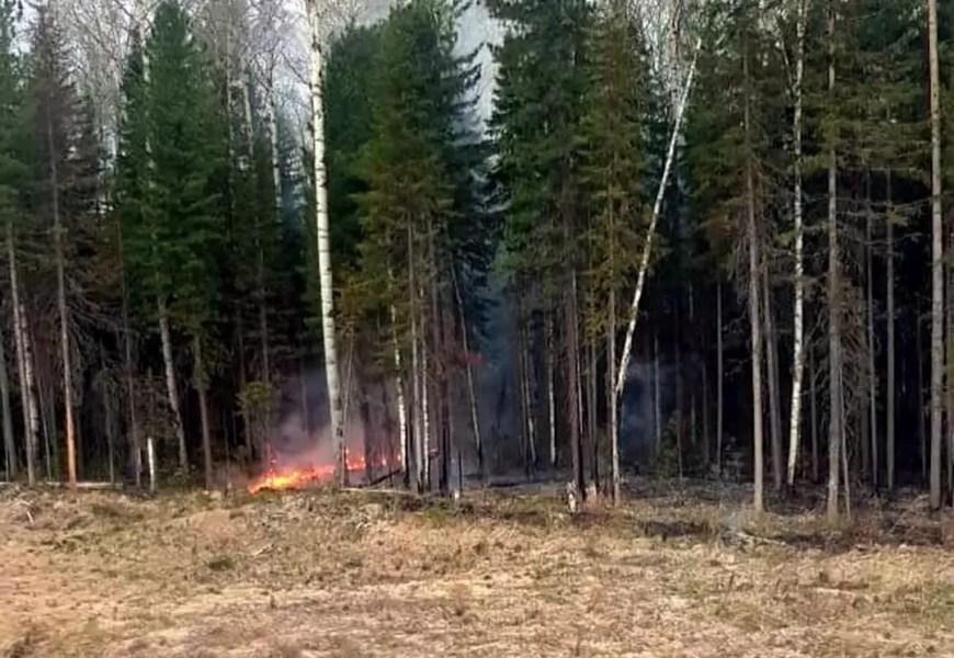 Между Салымом и Демьянкой около ж/д путей горит лес