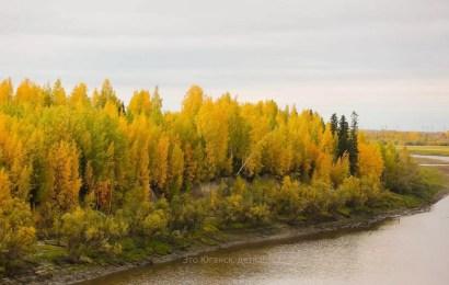 Осень золотая…