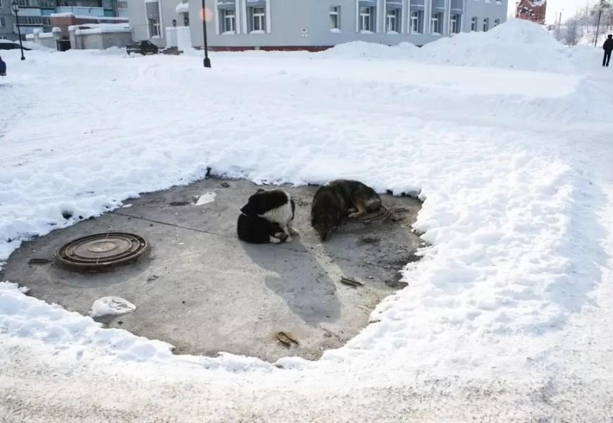 В Нефтеюганске решают проблему отлова и содержания бездомных собак