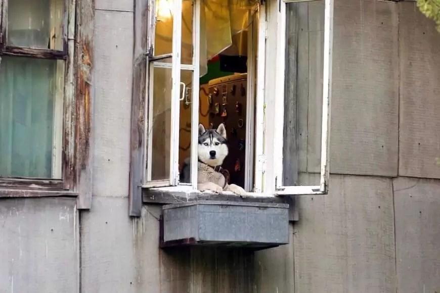 Владельцев крупных собак могут обязать проходить курсы кинологов Общественники требуют обязать владельцев крупных собак проходить курсы кинологов