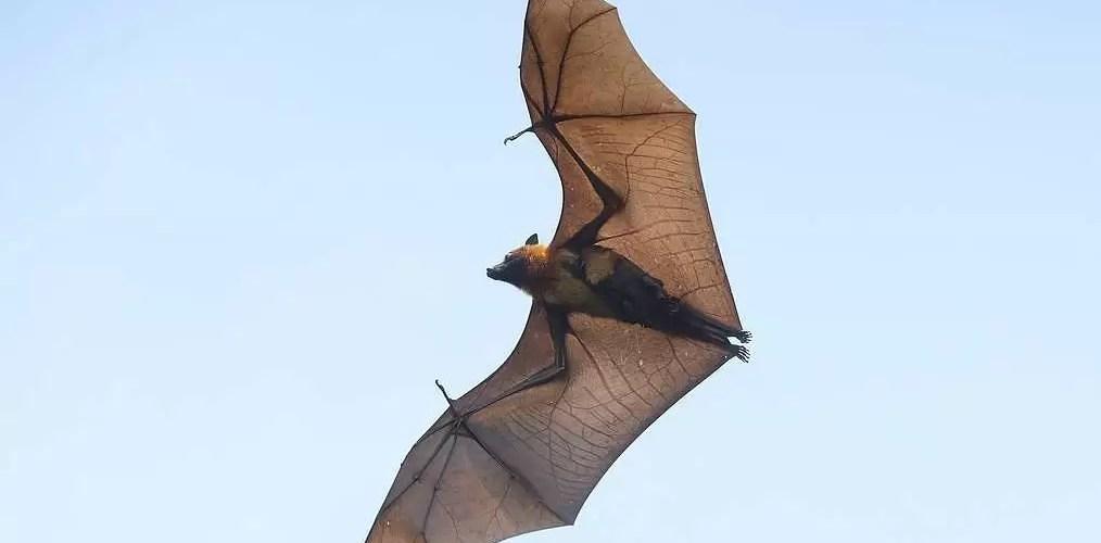 Эксперт ВОЗ назвал версию передачи коронавируса летучими мышами наиболее вероятной