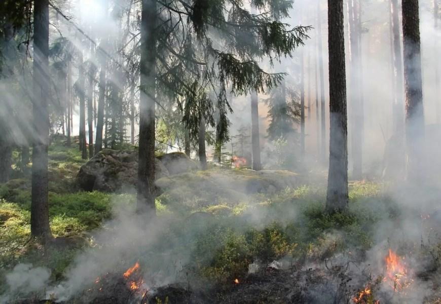 В лесах Югры установили пожароопасный период