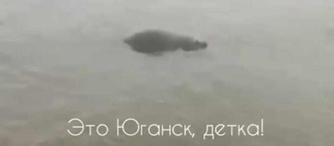 Тюлень в Юганке