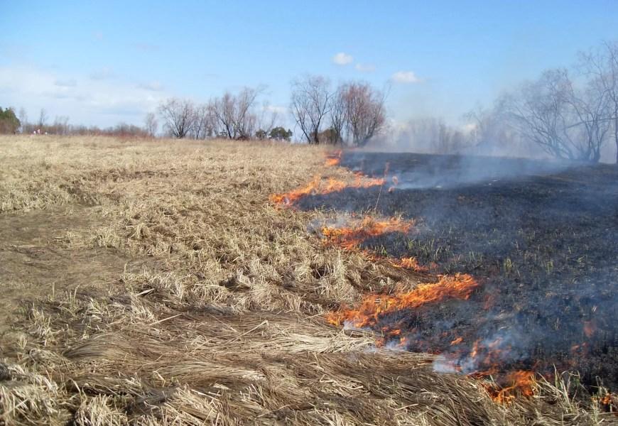 Дым от природных пожаров в Тюменской области может прийти в Югру