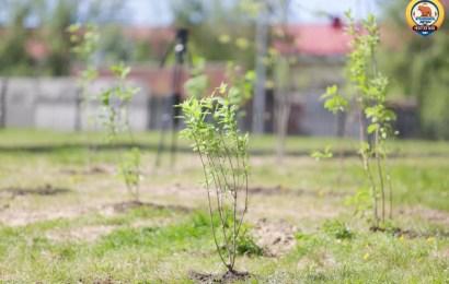 Венгерская зелень – на юганской земле.