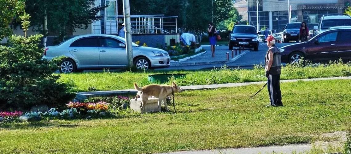 Россиянам в пьяном виде запретят выгуливать животных