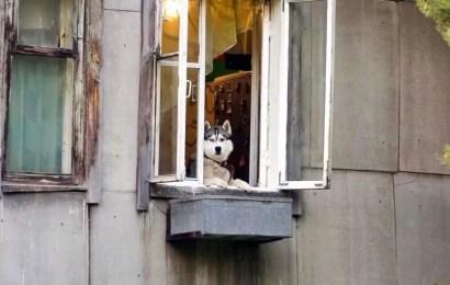 В России могут ограничить количество домашних животных в квартирах