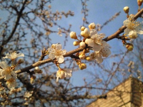 Early signs of Spring