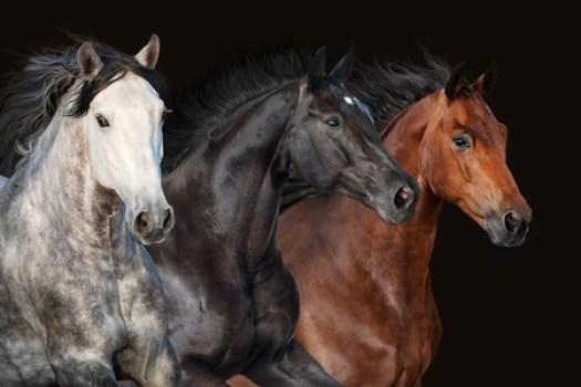 etologia equestre