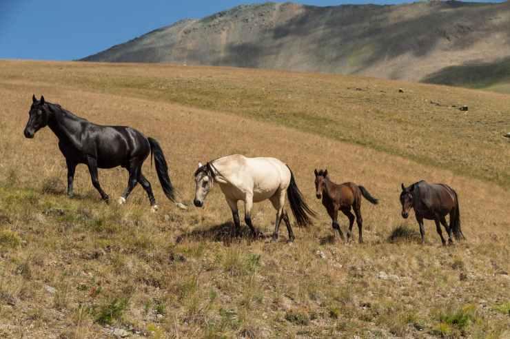 herd of horses on grass field