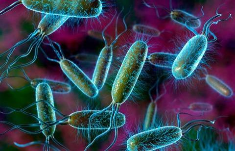 Escherichia coli в мазке у мужчин