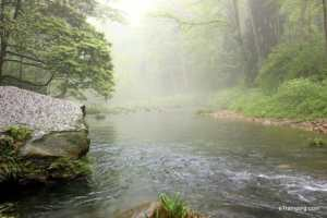 A peaceful stream in ZhangJiaJie National Forest Park