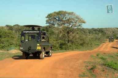 Safari at Yala National Park