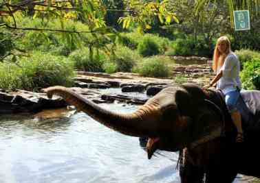 Elephant is smiling