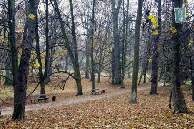The late autumn