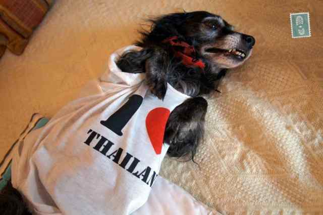 My dog loved his new t-shirt