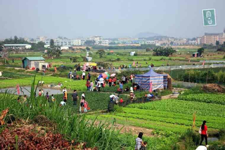 Local farm in Dongguan where strawberries grow