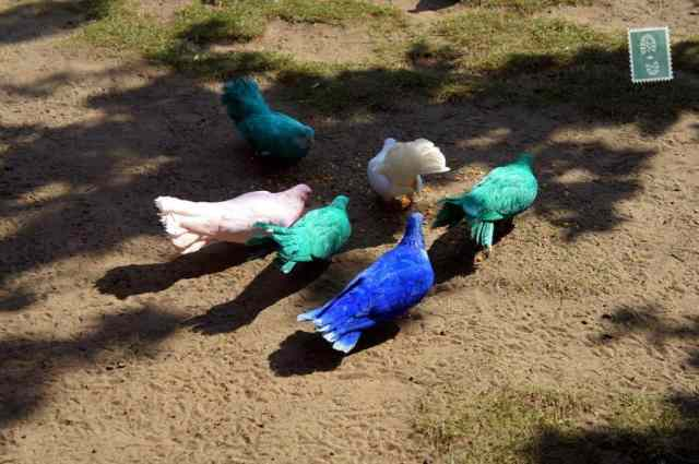 Colorful birds (they were real) in Efteling