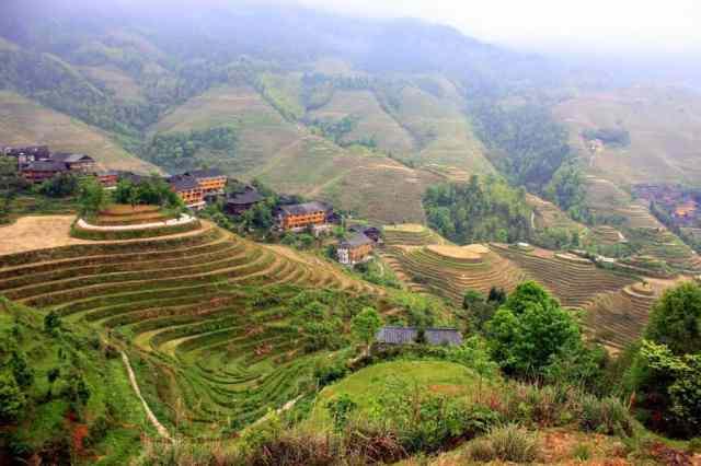 Longji Terraced Fields (5)