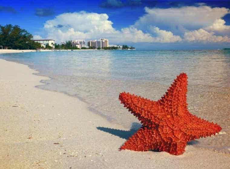 starfish-nassau-bahamas