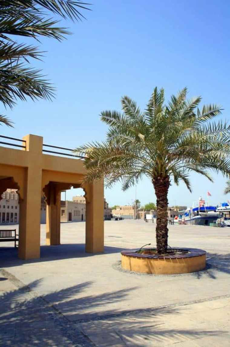 Palm trees are everywhere around the city.
