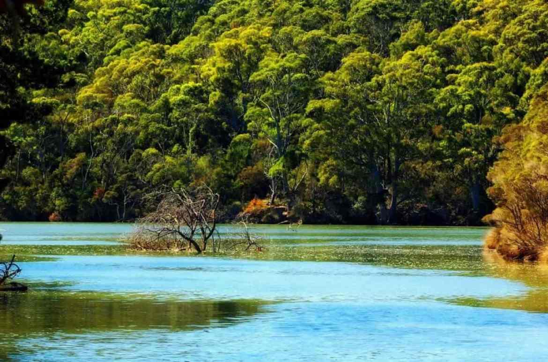 a beach in tasmania