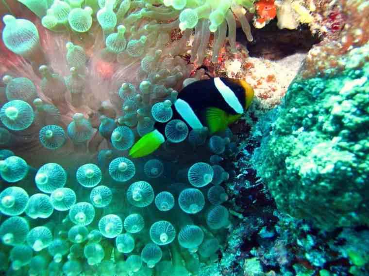 Snorkeling Fish, the Maldives