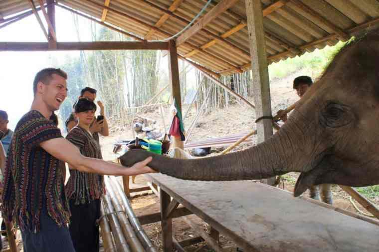 Cez saying hi to an elephant