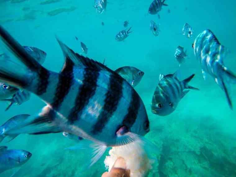 Scuba Diving in Mahe