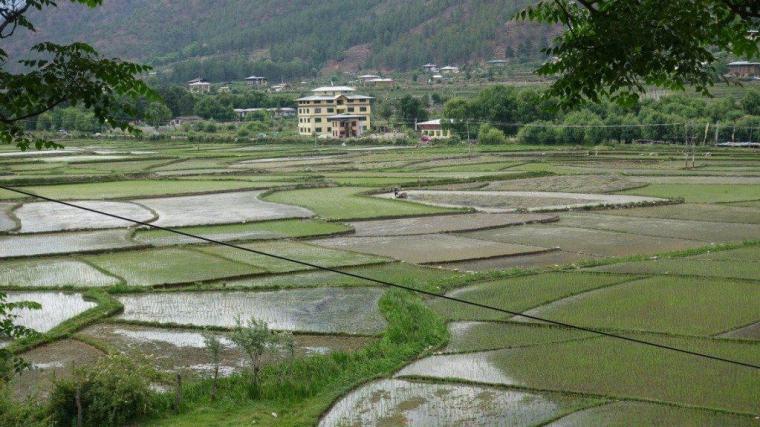 Rice paddies in Bhutan