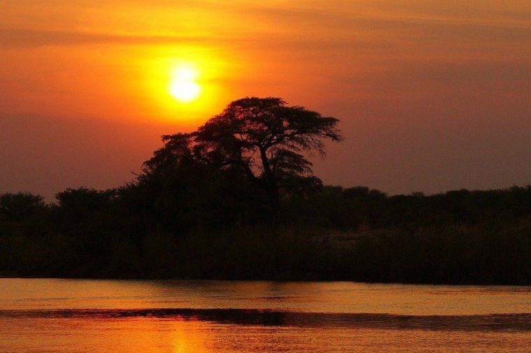 Tree in the sunset in Africa - gorilla safari