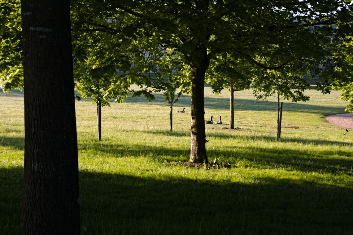 Bernaches parc