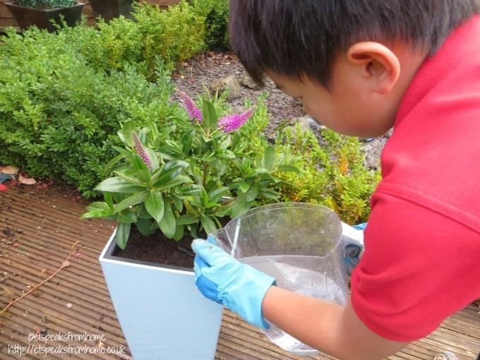 lechuza self watering planter watering