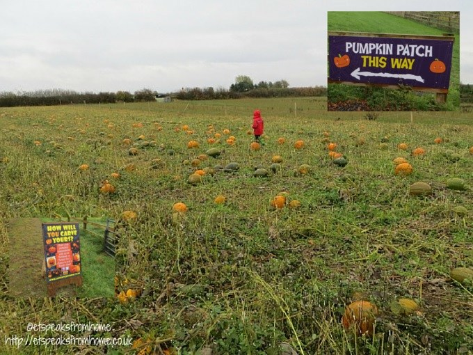 picking pumpkins at national forest adventure farm