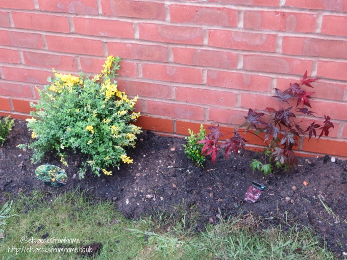 Add colour to my Garden shrub