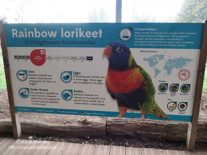 The Great Brick Safari at Twycross Zoo Lorikeet