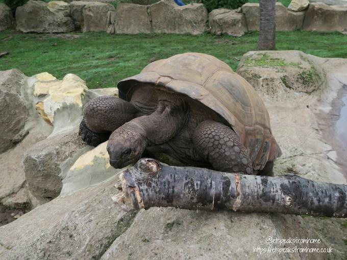 The Great Brick Safari at Twycross Zoo totorise